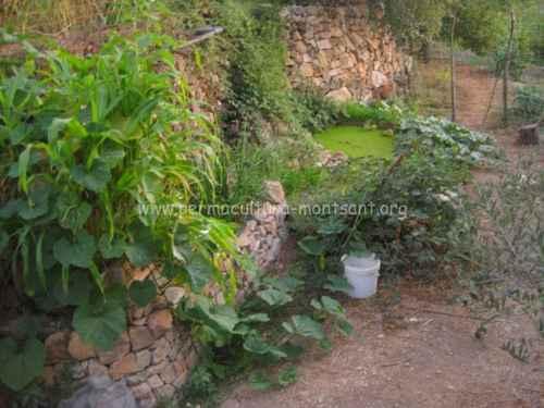 Se han desarrollado plantas útiles: lemna para las gallinas, consuelda...