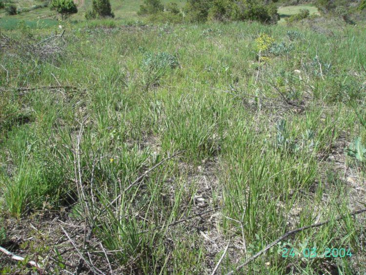 la misma parada semanas después, la hierba recuperada y buena cubierta vegetal