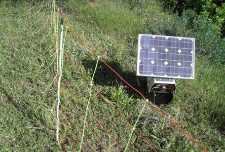 Un pastor eléctrico y dos redes unidas dan para unos 500 m2 de pasto, y son muy flexibles