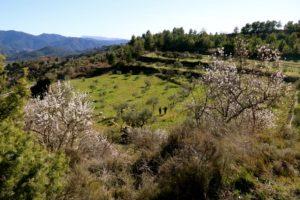 agricultura regenerativa: siempre verde