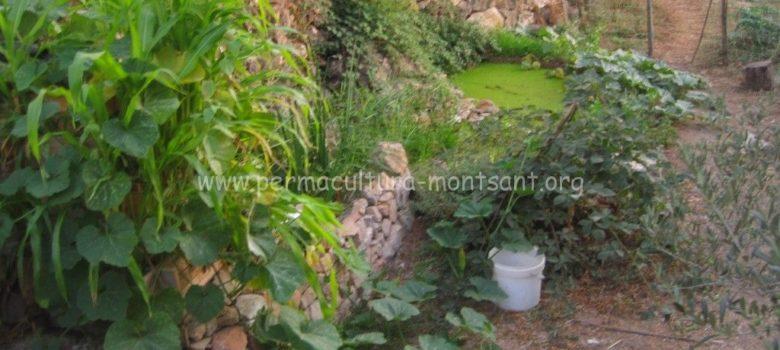 depuradora con plantas acuaticas